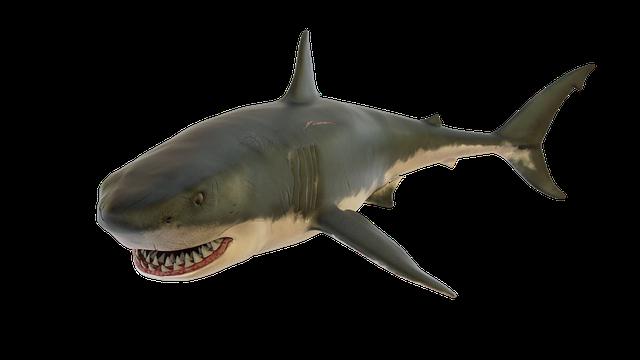 umělý žralok